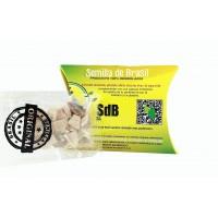 Brazil Seed